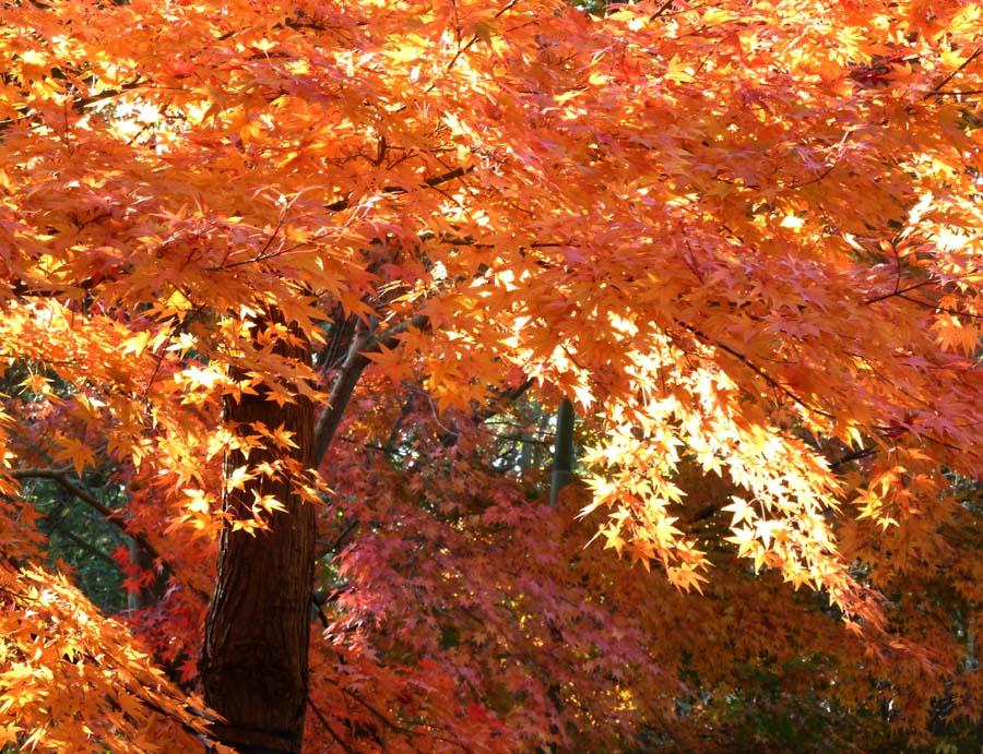 浄明寺の「黄葉と紅葉」_f0150893_17153296.jpg