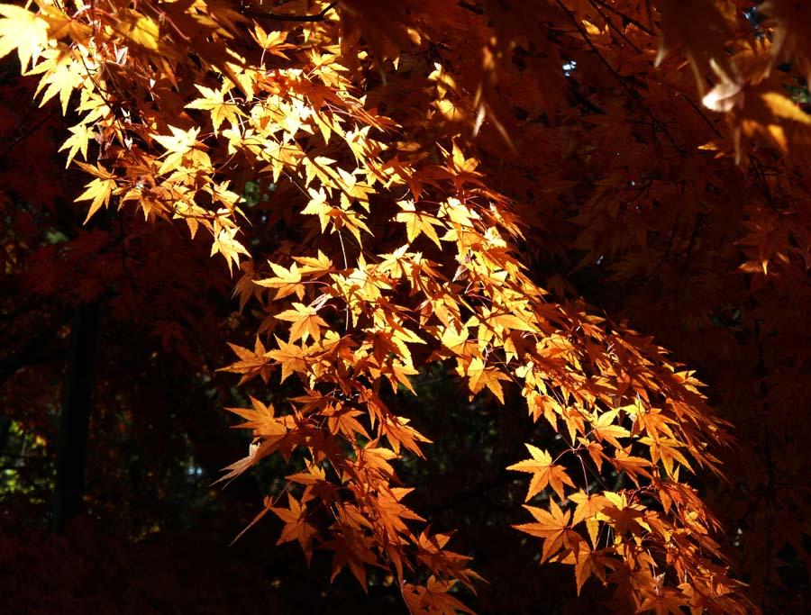浄明寺の「黄葉と紅葉」_f0150893_17155440.jpg