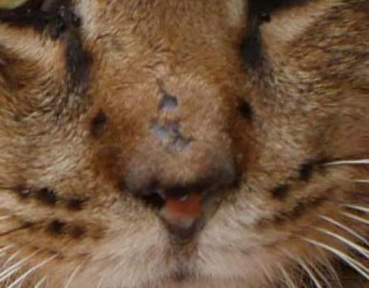 不思議な猫の物語(病気と怪我)_f0064906_18211978.jpg