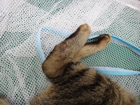 不思議な猫の物語(病気と怪我)_f0064906_18264992.jpg
