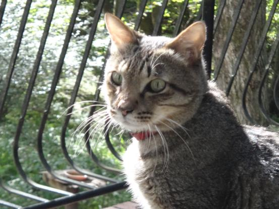 不思議な猫の物語(病気と怪我)_f0064906_18334322.jpg