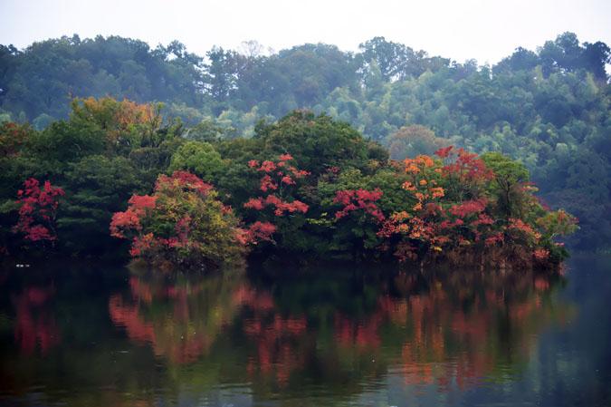 伊豆高原 一碧湖の紅葉1_a0263109_20395375.jpg