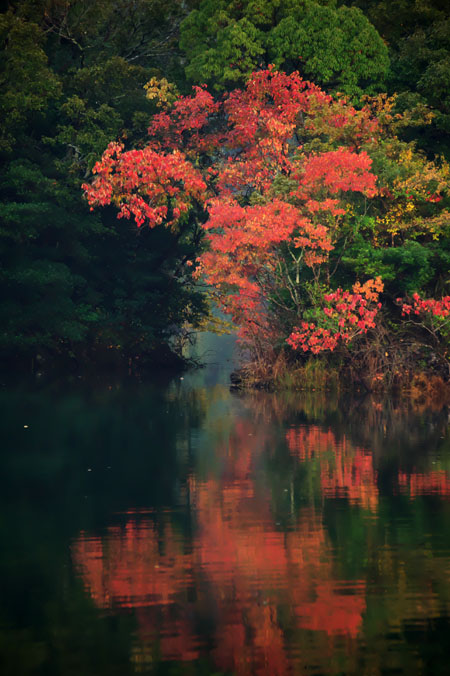 伊豆高原 一碧湖の紅葉1_a0263109_2040154.jpg