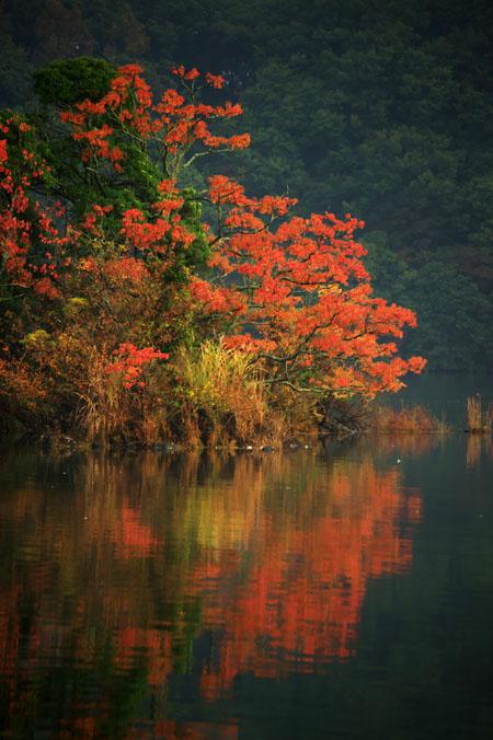 伊豆高原 一碧湖の紅葉1_a0263109_20412580.jpg