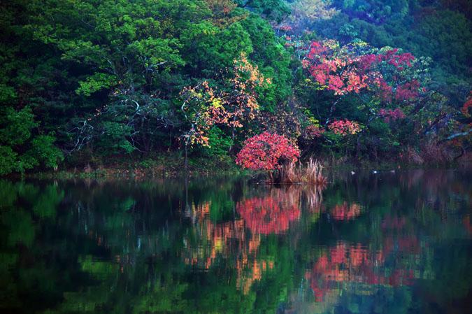 伊豆高原 一碧湖の紅葉1_a0263109_20421098.jpg