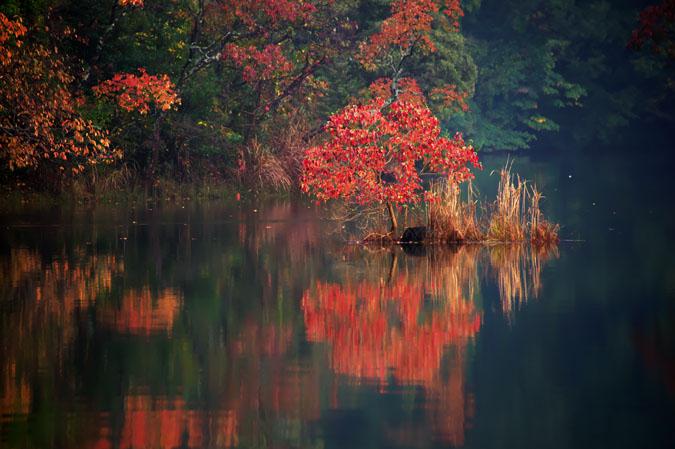 伊豆高原 一碧湖の紅葉1_a0263109_20422333.jpg