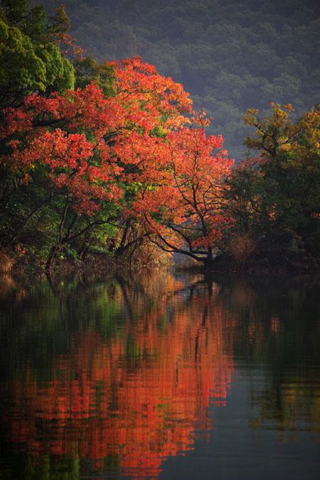 伊豆高原 一碧湖の紅葉1_a0263109_2044535.jpg