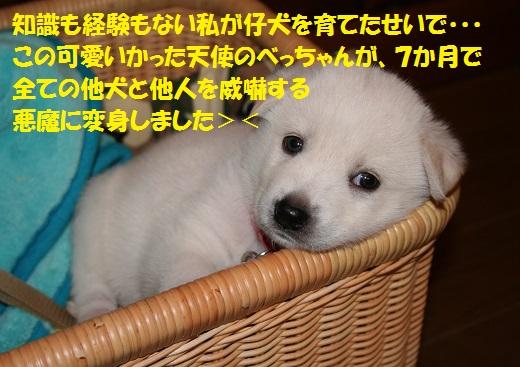 f0121712_7141829.jpg