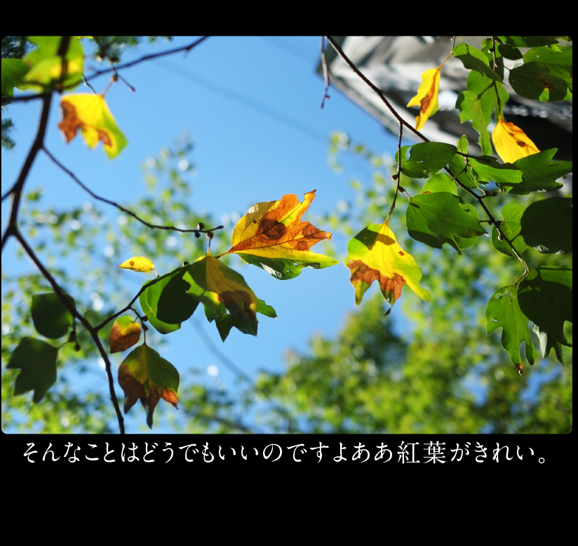 b0344119_22253867.jpg