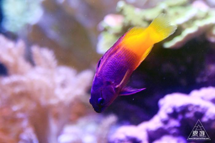 390 Aquarium Of The Bay ~サンフランシスコの水族館~_c0211532_2154541.jpg