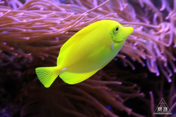 390 Aquarium Of The Bay ~サンフランシスコの水族館~_c0211532_21554122.jpg