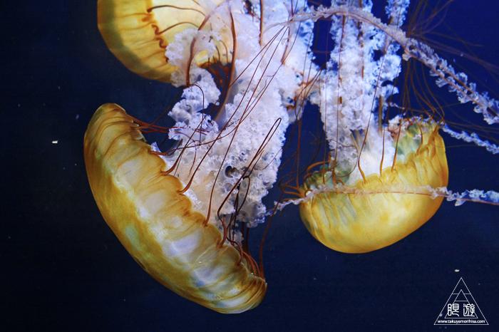 390 Aquarium Of The Bay ~サンフランシスコの水族館~_c0211532_2317212.jpg