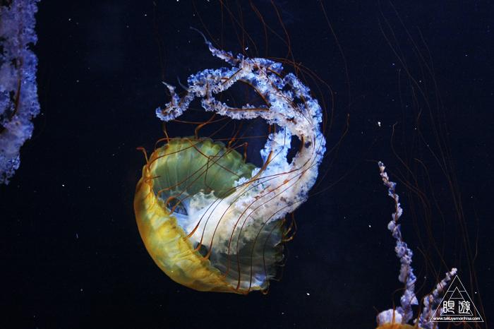 390 Aquarium Of The Bay ~サンフランシスコの水族館~_c0211532_23341940.jpg