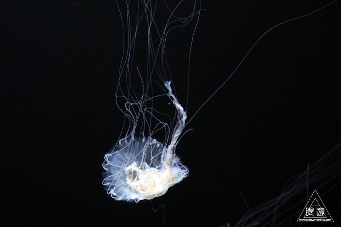 390 Aquarium Of The Bay ~サンフランシスコの水族館~_c0211532_23344954.jpg