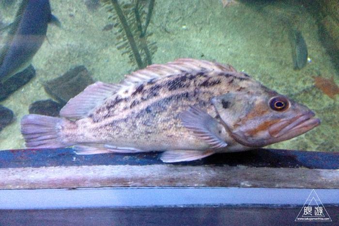 390 Aquarium Of The Bay ~サンフランシスコの水族館~_c0211532_23383642.jpg