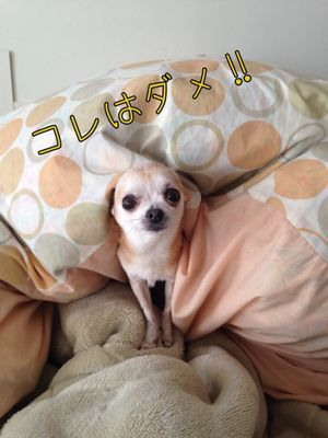 c0298732_20121022.jpg