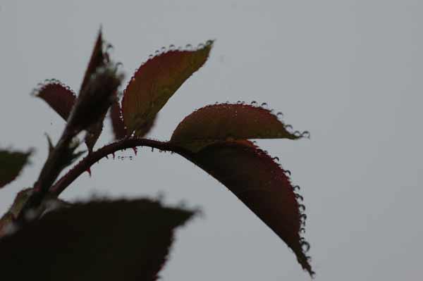 葉っぱのパフォーマー_e0097534_1824252.jpg