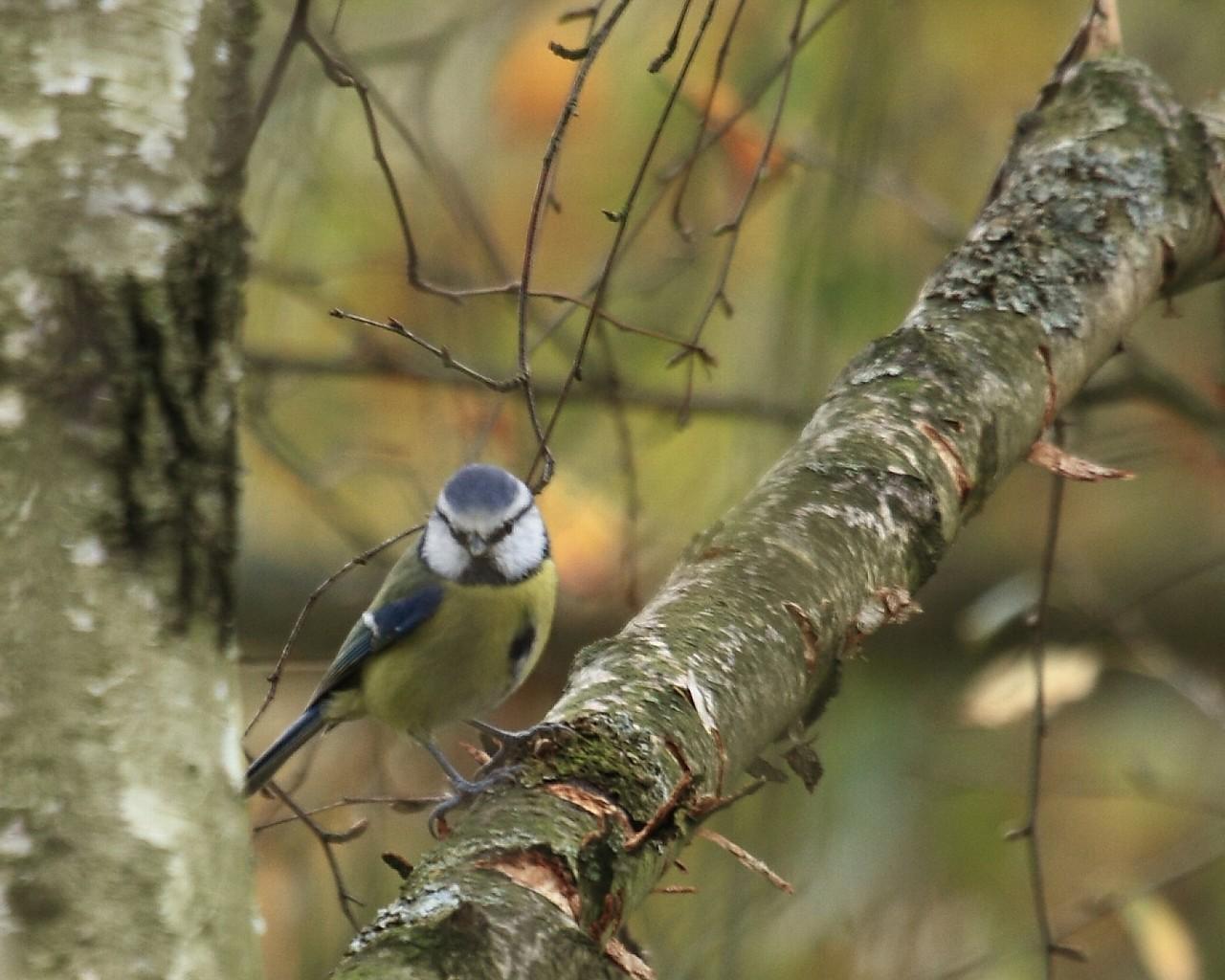 フランクフルトの鳥その3_f0105570_2221793.jpg