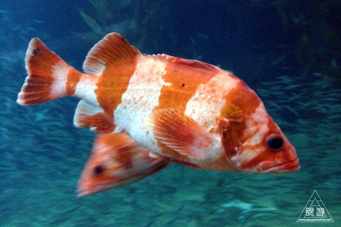 390 Aquarium Of The Bay ~サンフランシスコの水族館~_c0211532_033414.jpg