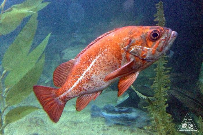 390 Aquarium Of The Bay ~サンフランシスコの水族館~_c0211532_03470.jpg