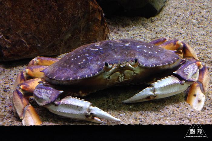 390 Aquarium Of The Bay ~サンフランシスコの水族館~_c0211532_052528.jpg