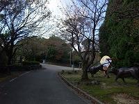 倶利伽羅県定公園周辺紅葉情報_c0208355_17342560.jpg