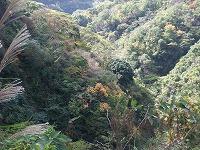 倶利伽羅県定公園周辺紅葉情報_c0208355_18102088.jpg