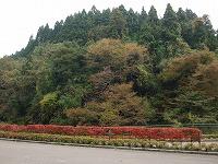 宮島峡紅葉情報_c0208355_18361825.jpg