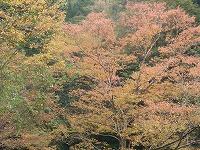 宮島峡紅葉情報_c0208355_18391862.jpg