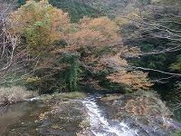 宮島峡紅葉情報_c0208355_18393410.jpg