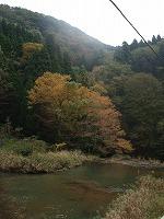 宮島峡紅葉情報_c0208355_18395684.jpg