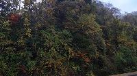 宮島峡紅葉情報_c0208355_18523548.jpg