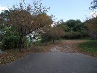 倶利伽羅県定公園周辺紅葉情報_c0208355_1893990.jpg