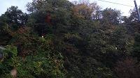 宮島峡紅葉情報_c0208355_1921438.jpg