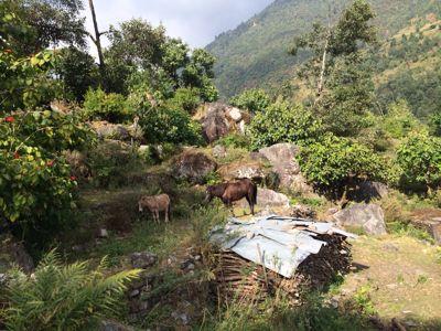 南部、ネパールに降り立つの巻_d0197762_10391337.jpg