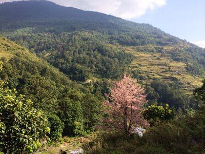 南部、ネパールに降り立つの巻_d0197762_10391834.jpg