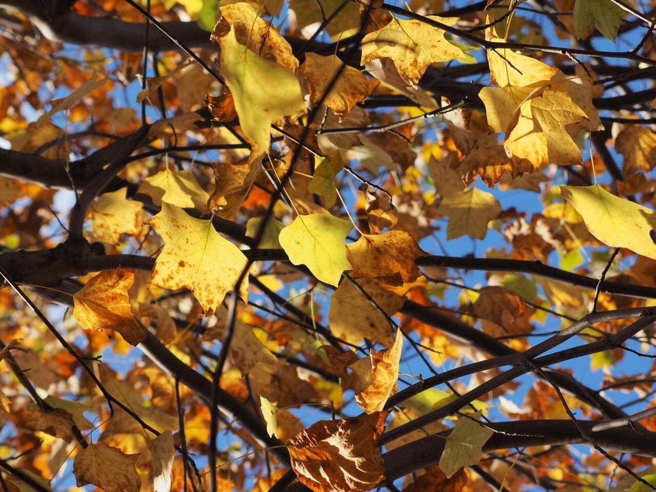 2014年11月13日 紅葉来たる_f0108797_15484402.jpg