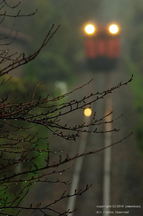 樹の滴を ~三江線に朱色キハが帰ってきた日_d0309612_22103339.jpg