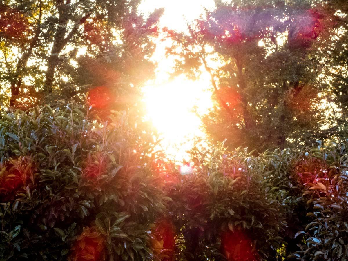 まぶしい夕陽_d0192516_21423993.jpg