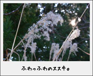 c0259934_922282.jpg