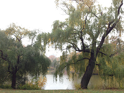 Autumn in NY_f0171840_16425622.jpg