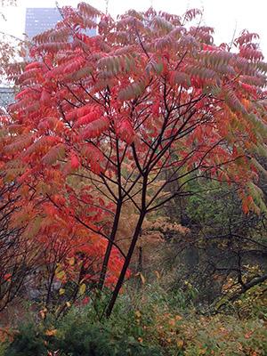 Autumn in NY_f0171840_16432658.jpg