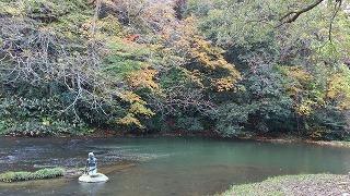 宮島峡紅葉情報_c0208355_13544026.jpg