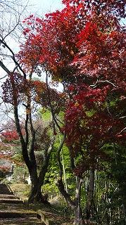 城山公園紅葉情報_c0208355_1511149.jpg