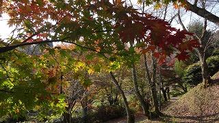 城山公園紅葉情報_c0208355_15113892.jpg