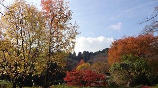 城山公園紅葉情報_c0208355_1552344.jpg