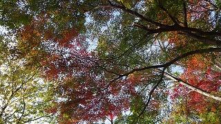 城山公園紅葉情報_c0208355_155361.jpg