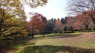 城山公園紅葉情報_c0208355_1554793.jpg