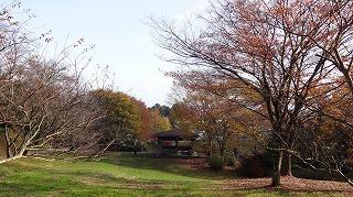 城山公園紅葉情報_c0208355_1562142.jpg