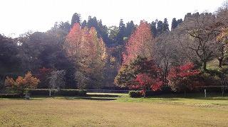 城山公園紅葉情報_c0208355_156268.jpg